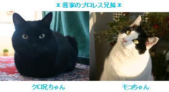 mokokuro.JPG